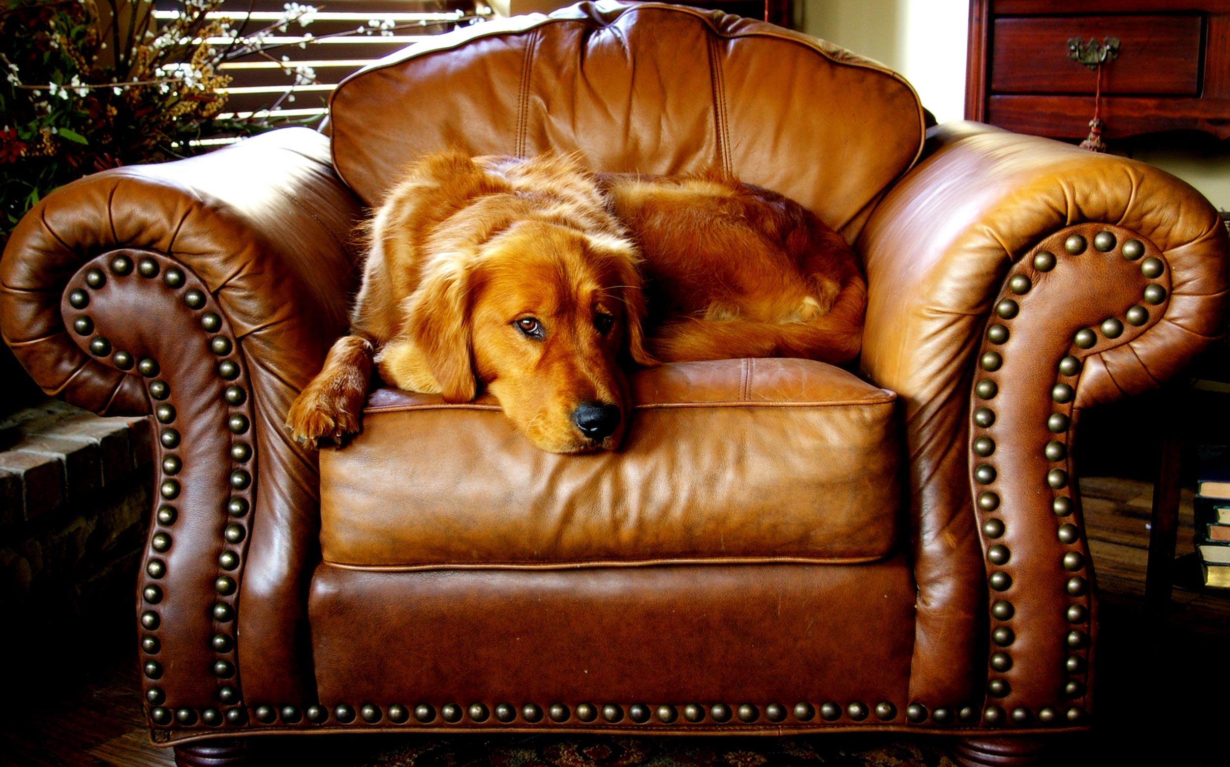 Opa s stoel opnieuw bekleed met leer u stadman meubelstoffering